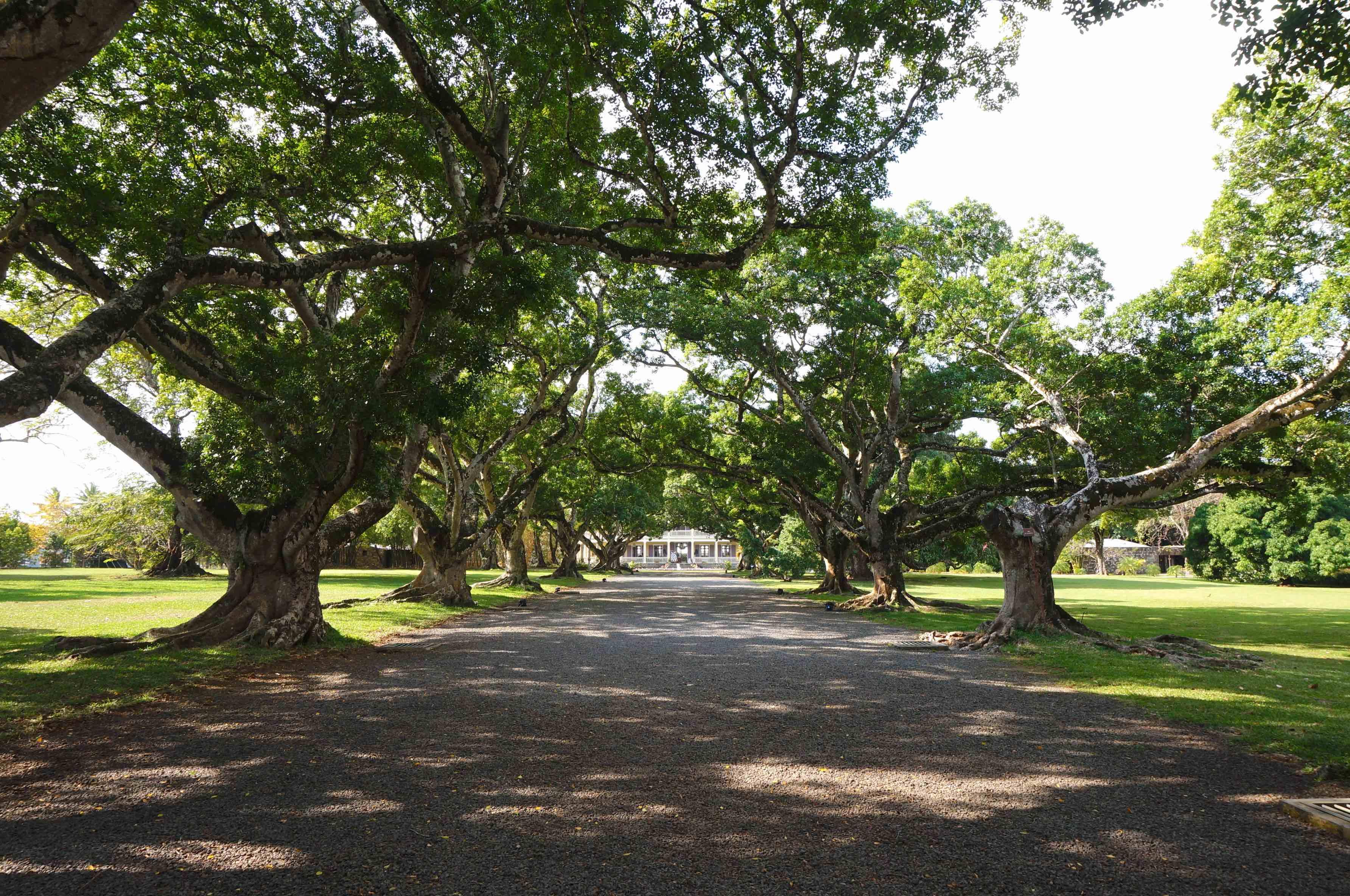 allée - domaine de la bourdonnais, île maurice