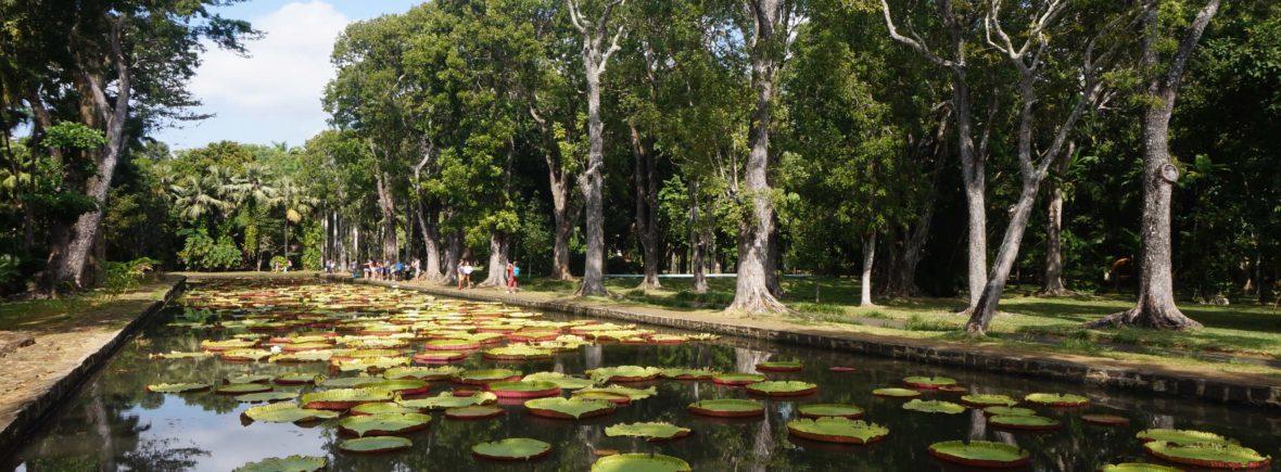 jardin de pamplemousse, île maurice