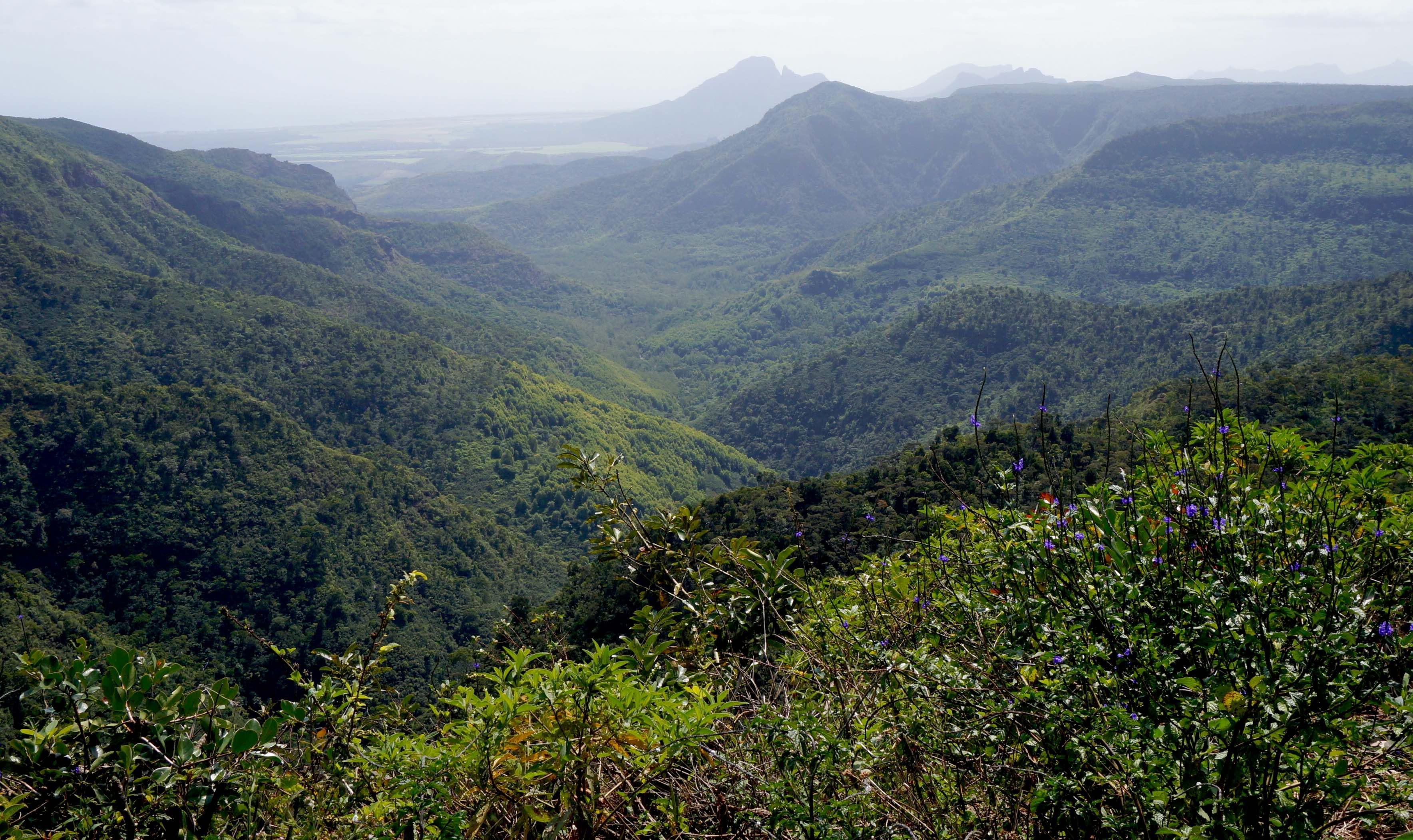 parc national des gorges de la riviere noire, ile maurice
