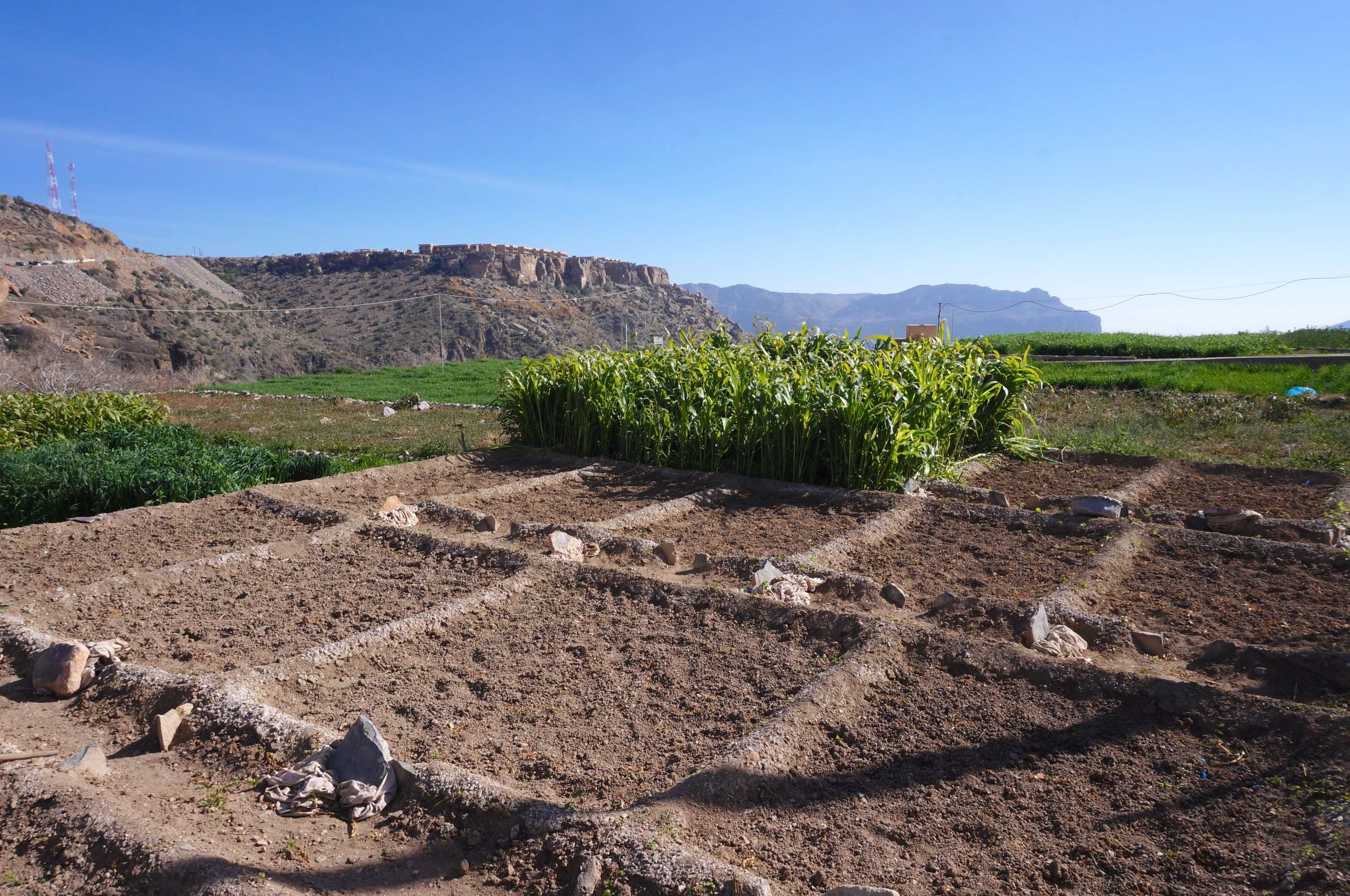 al ayn, plateau de sayq, jebel akdhar, oman