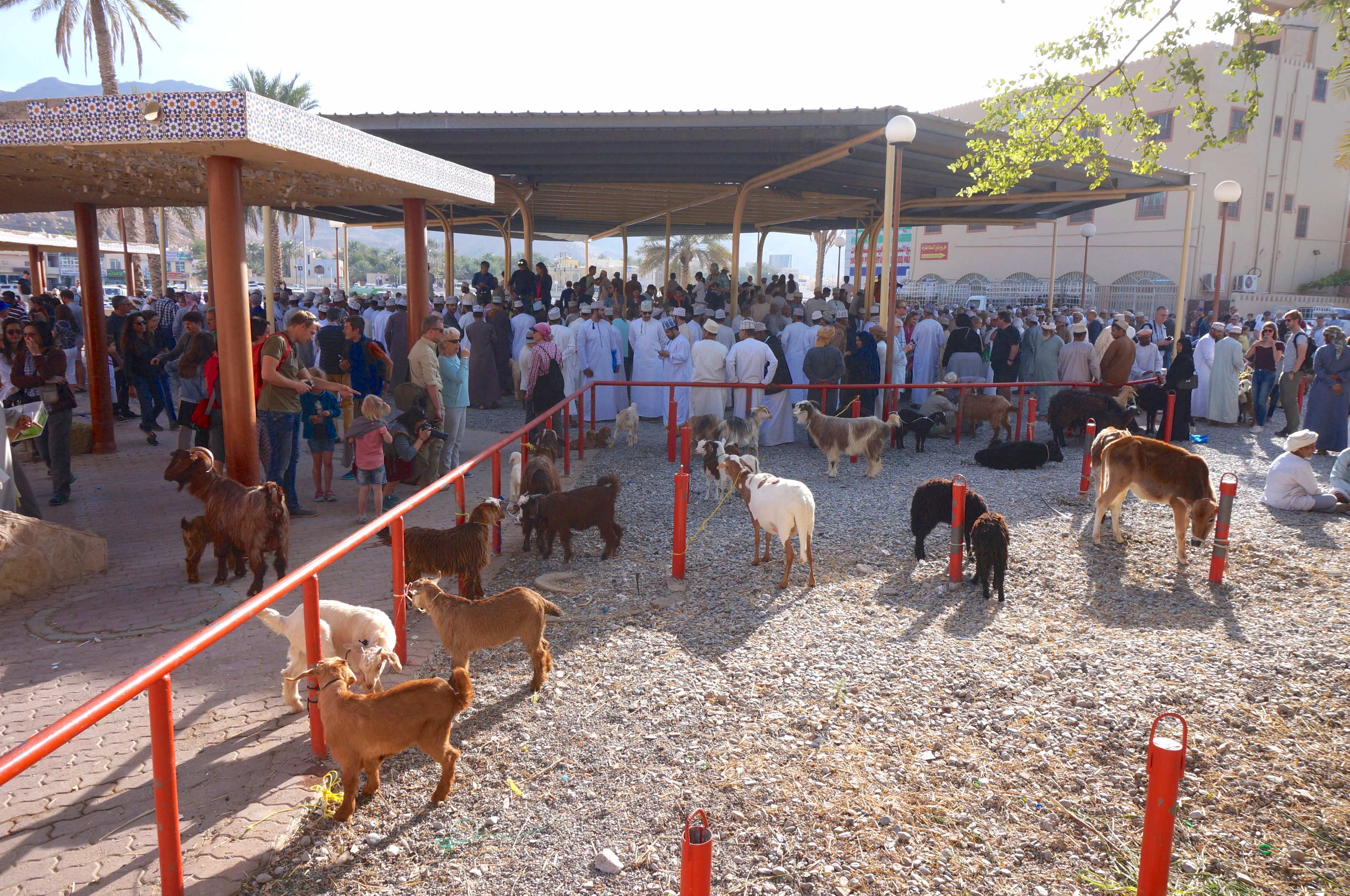 souk de nizwa, marche aux bestiaux, oman