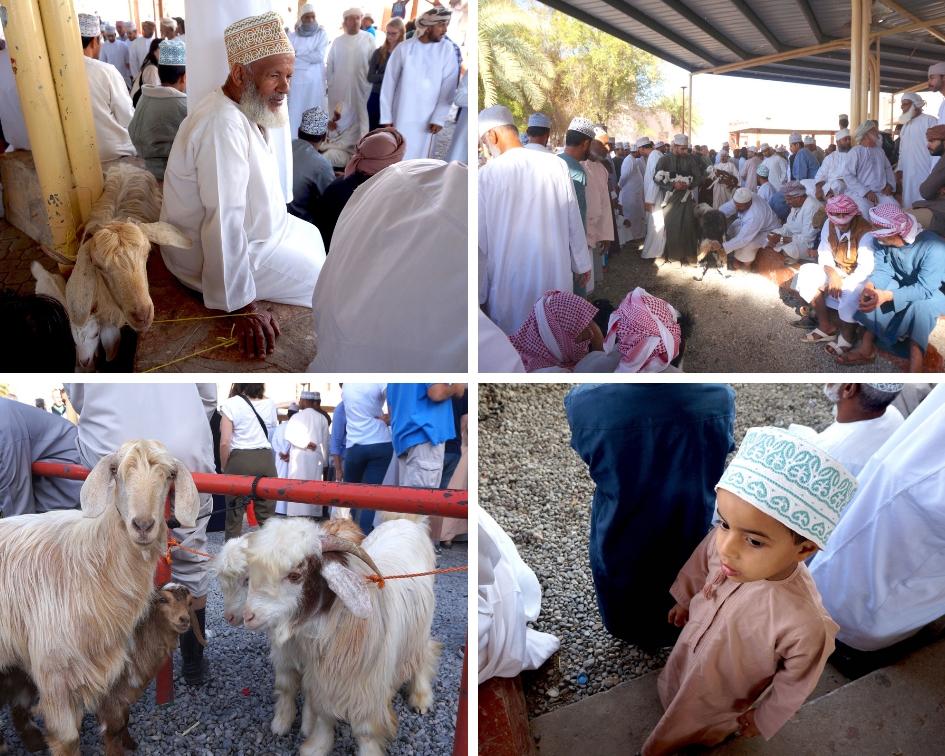 marché aux bestiaux, nizwa, oman