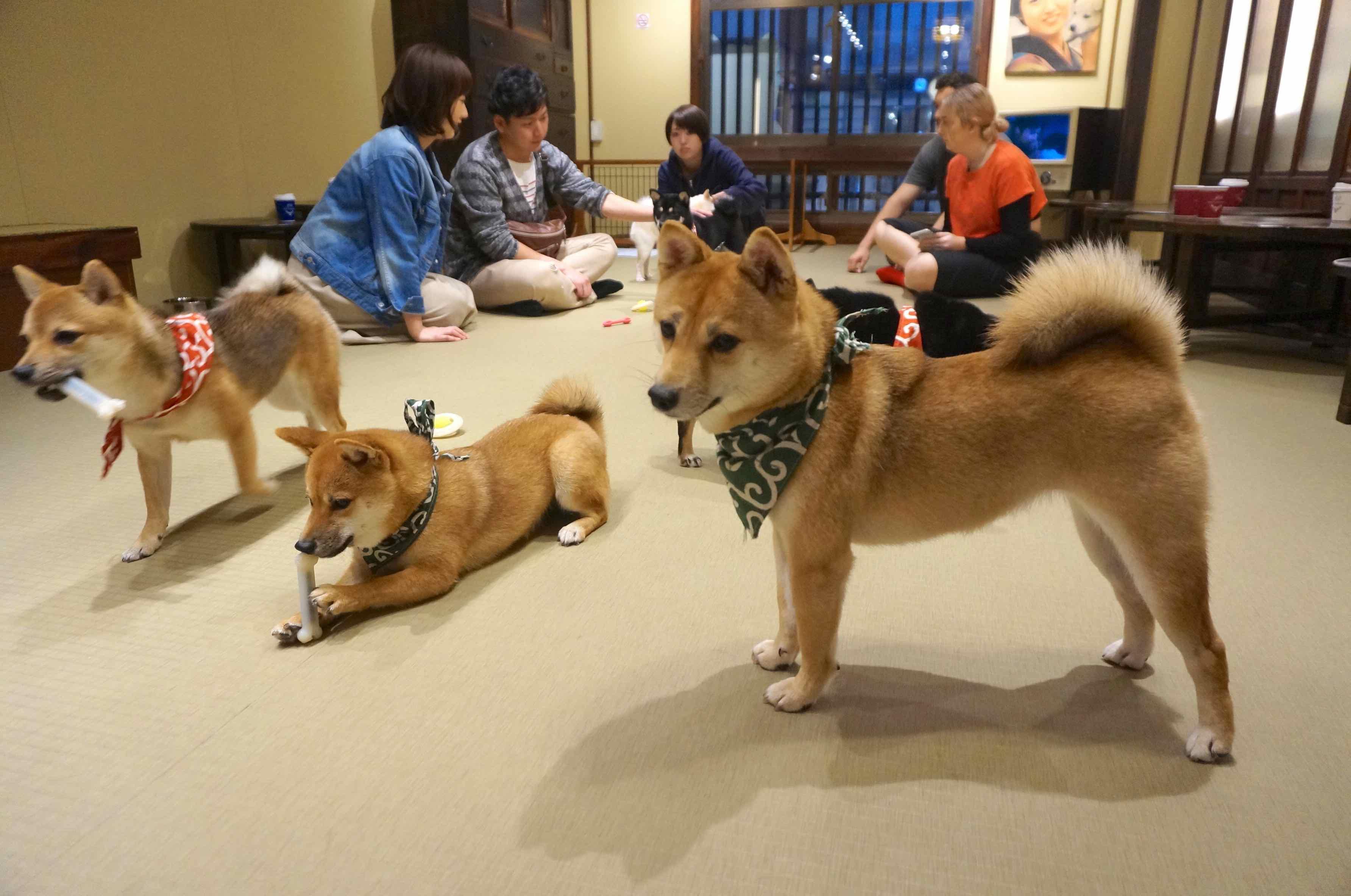 bar à chien, osaka, shiba, japon
