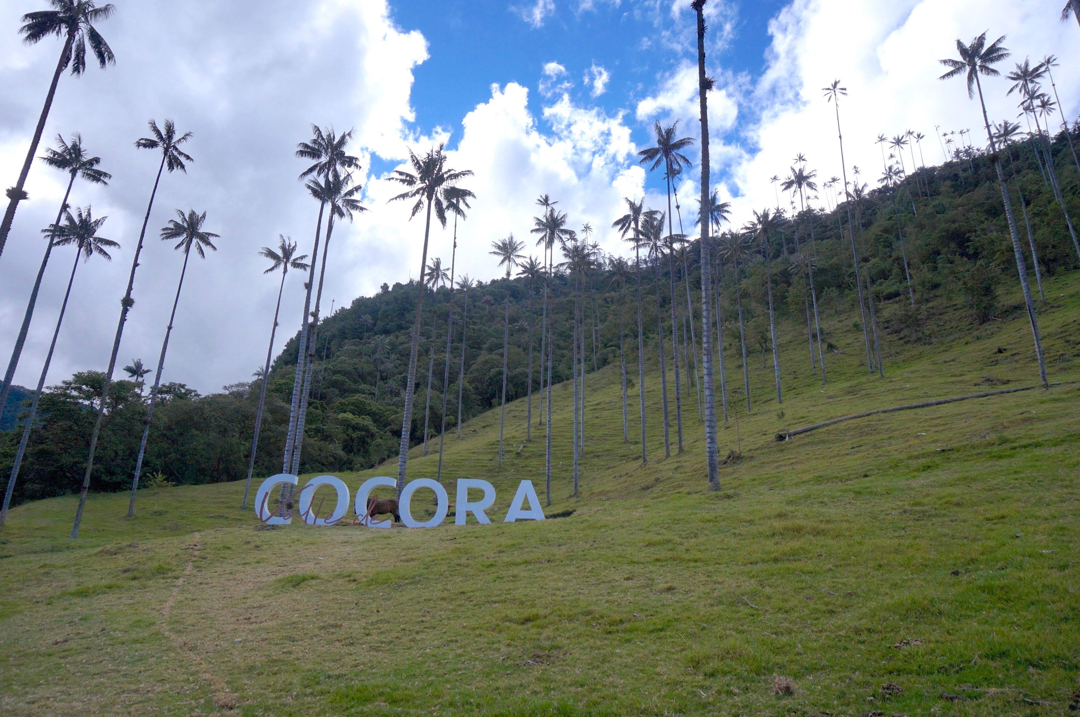 vallée de cocora, colombie