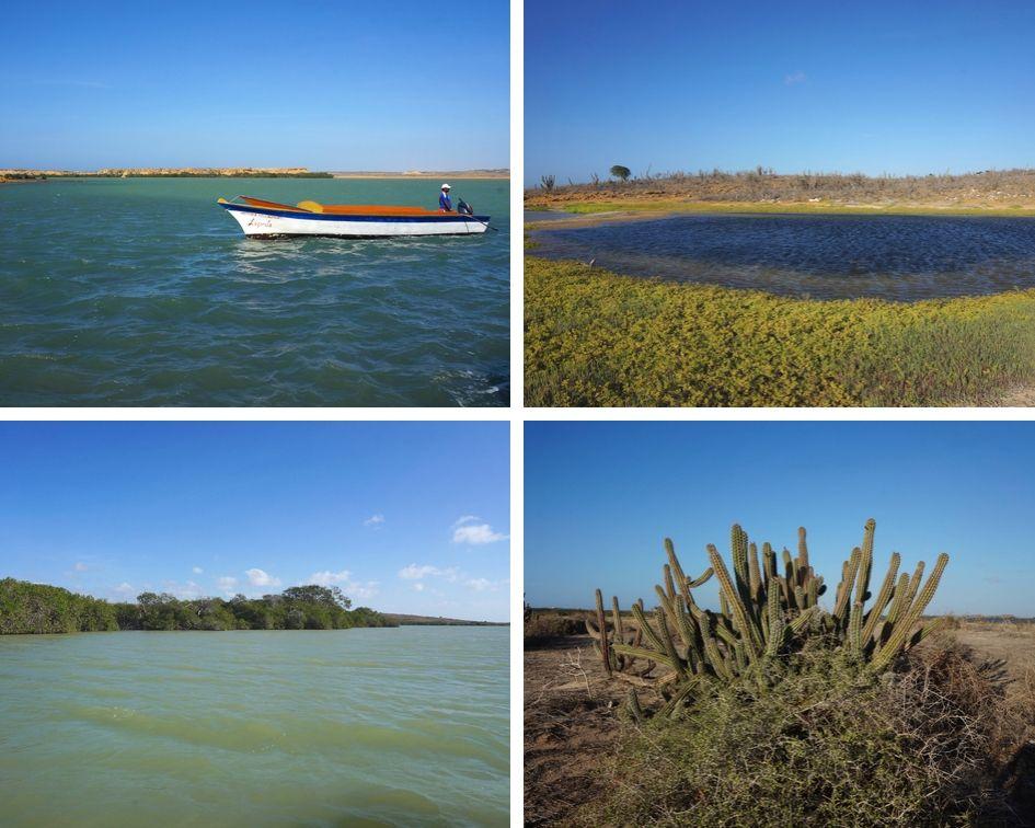 punta gallinas mangrove, péninsule de guajira, colombie