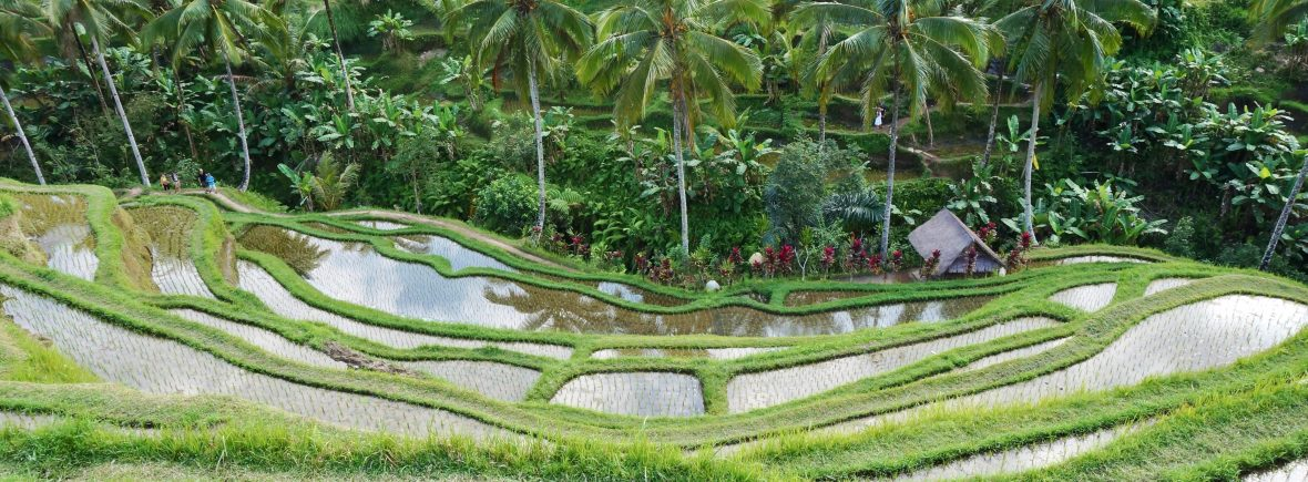 Bali - Tegallalang - indonésie