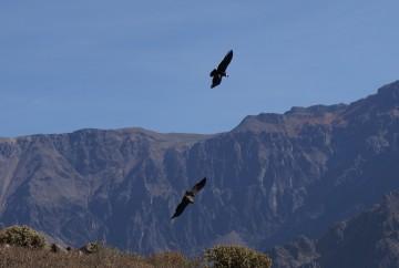 Canyon del Colca Pérou