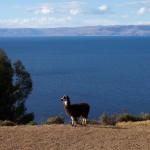 Copacabana, Isla del Sol et lac Titicaca