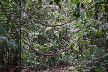 Sarapaqui costa rica