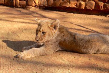Ukutula, afrique du sud