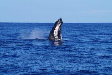 voir des Baleines réunion