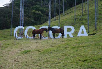 vallée de cocora, salento, colombie